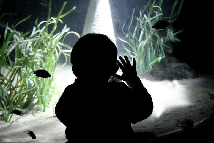 Wir können nur Jungs Andrea Harmonika Jedemanfangwohnteinverdammterzauberinne Foto: Andrea Litzenburger